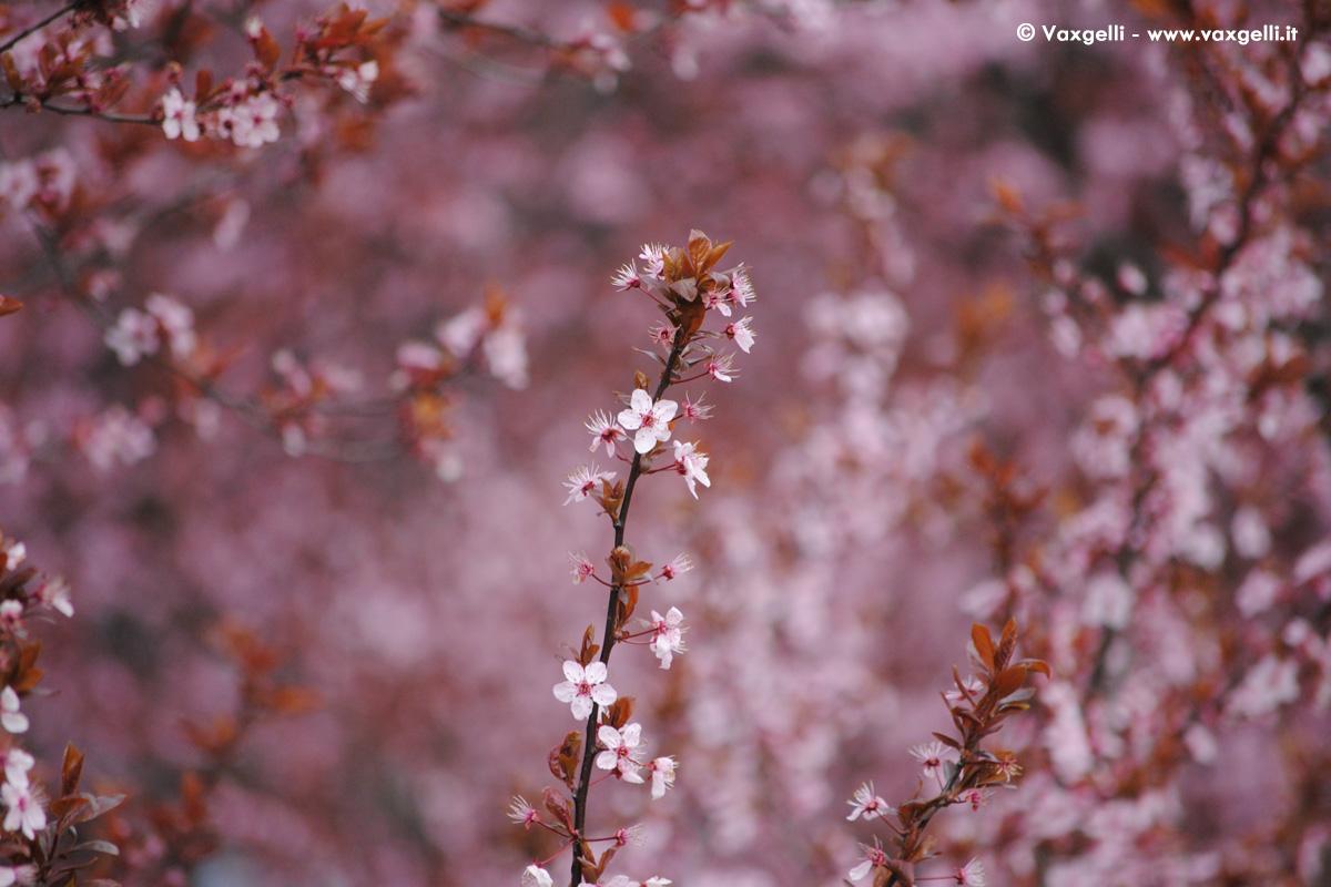 E primavera, gli alberi sono in fiore