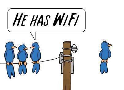 Uccellino WiFi Twitter