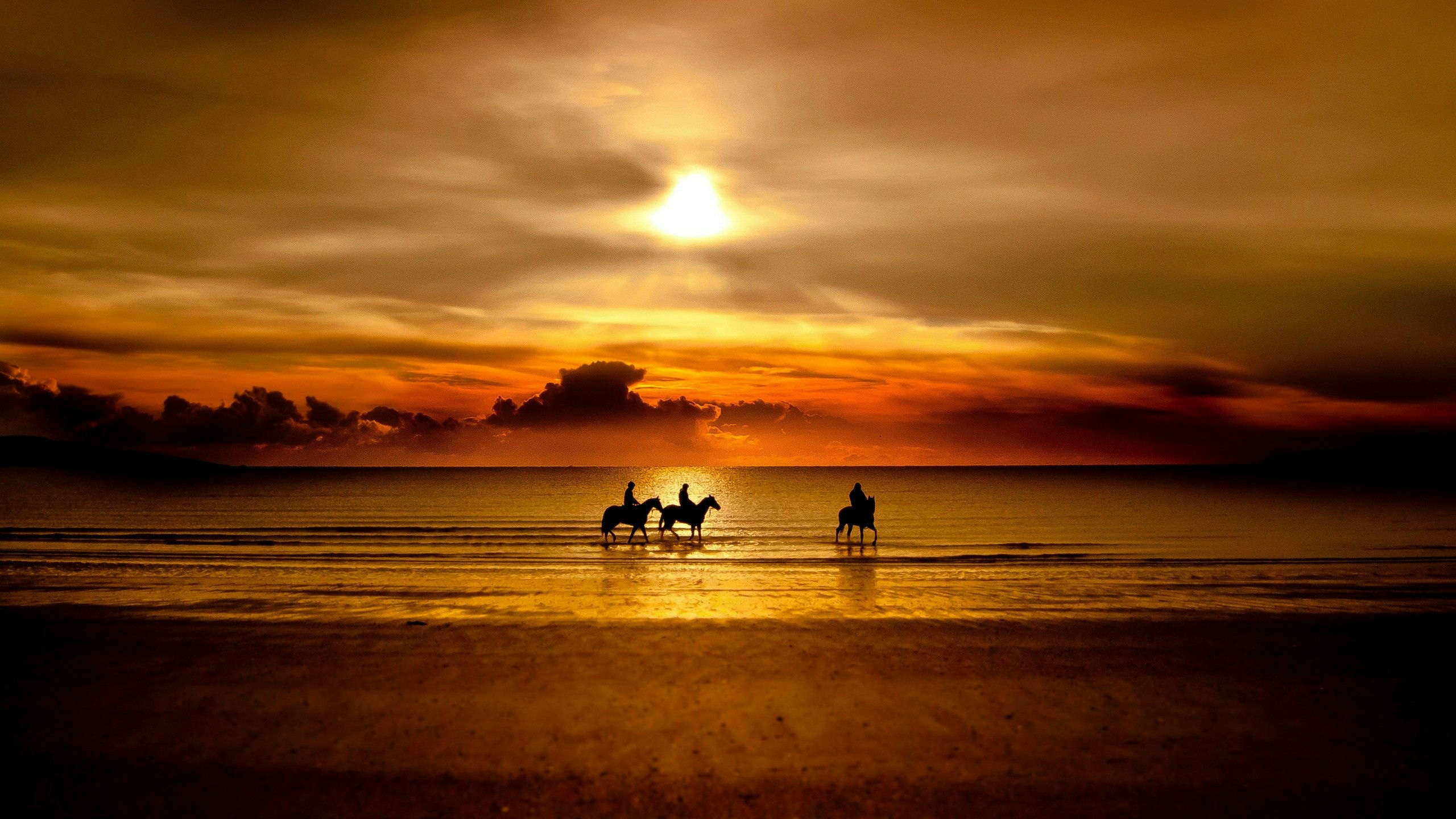 Cavalli sul mare al tramonto