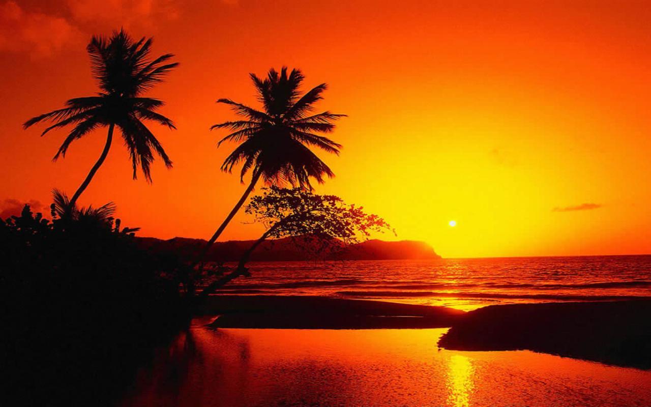 Palme sul mare al tramonto