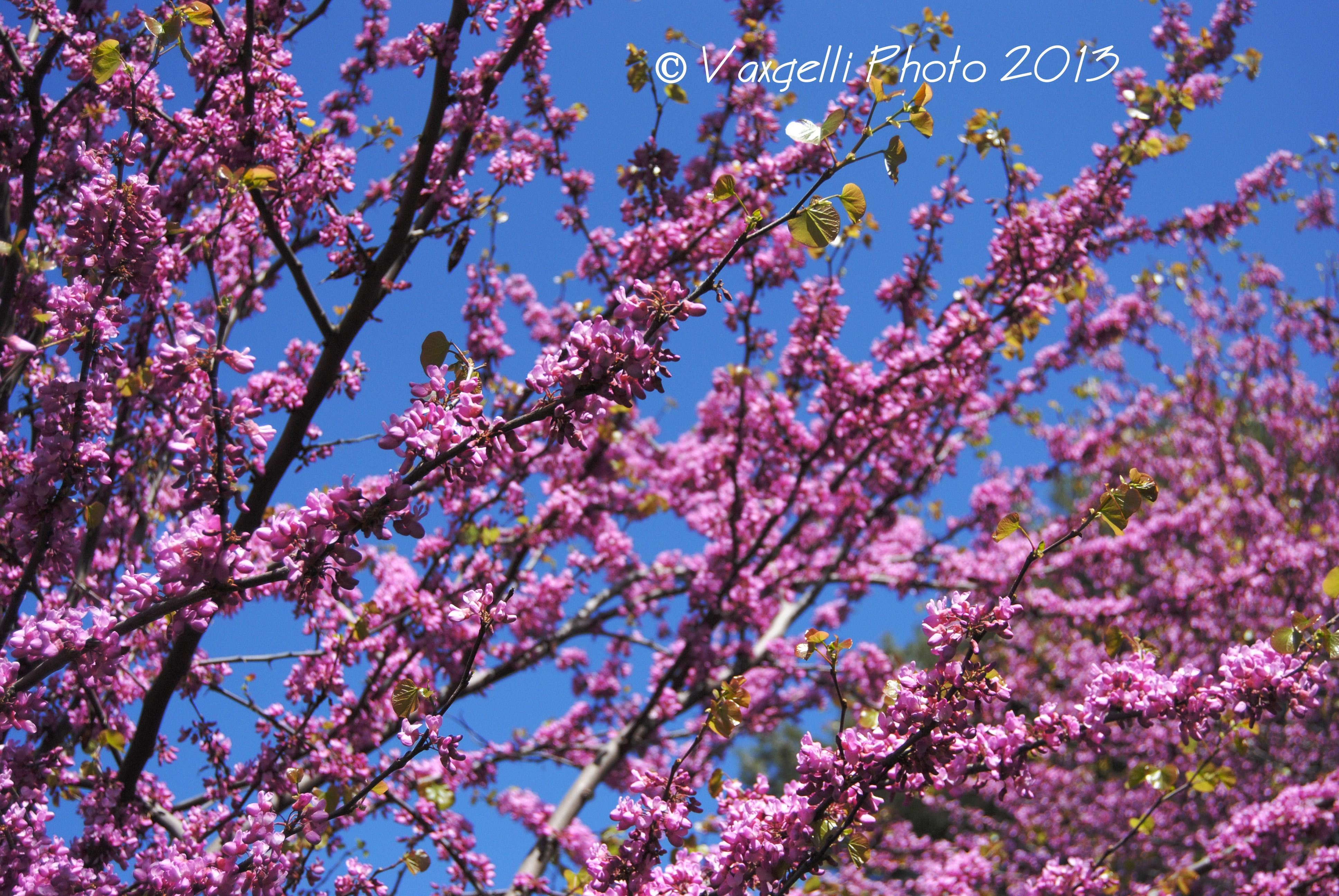 Gli alberi in fiore a Febbraio....